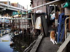 Urashima#10 (tetsuo5) Tags: cat yokohama 猫 横浜 路地 gf1 浜通り kanagawaku 神奈川区 子安 nokton25mmf095