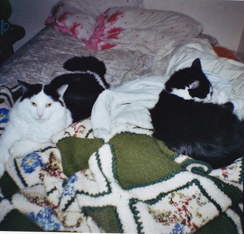 jennis cats