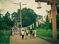 Дорога к храму Дерева Будды