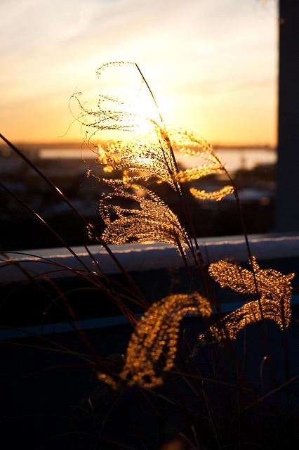 Sun sets through