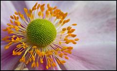 _SG_2010_10_1023 (_SG_) Tags: flowers flower canon schweiz switzerland is suisse wiese blumen basel 7d usm blume bale ef basle grün80 24105 gruen80 f4l 24105mm neuewelt canonef24105mmf4lisusm canonef24105mm ef24105mm ef24105 eos7d canoneos7d canon7d neueweltgrün80 neueweltgruen80