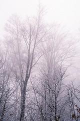 Hiking through mist (kostas katavoutas) Tags: fog landscape hiking greece