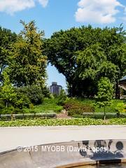 NYC Central Park 2014-8100396 (myobb (David Lopes)) Tags: calvertvaux centralpark em1 fredericklawolmsted manhattan nyc newyork newyorkcity omd olympus usa day green nature park summer