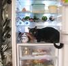 Rogue Kat by QFS_mlp (QueenFaeeStudio) Tags: canon catseyes black nero gatto blackcats gioco game fun havingfun magic cats felini gatti mici katze gatos blackcat