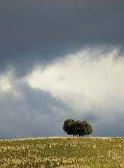 Tormenta (Manuel Teruel) Tags: arbol lluvia arboles sierra nubes campo hierba trescantos borrasca colorphotoaward