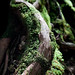 "IYakushima forest • <a style=""font-size:0.8em;"" href=""https://www.flickr.com/photos/40181681@N02/5208509852/"" target=""_blank"">View on Flickr</a>"