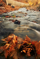 When autumn talks... (Arash Sefid) Tags: autumn red color fall water river soft iran enjoy arash mashhad orang khorasan sefid torghabe 18135 d80 khorasanrazavi arashsefid