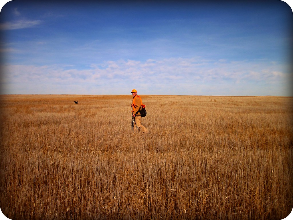 Hunting pheasants in Eastern, CO