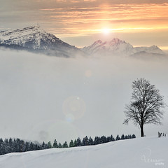 (remography) Tags: wood schnee sun mountain snow color tree berg forest schweiz switzerland photo nikon foto crop utata nikkor sonne wald farbe baum ausschnitt rigi d700