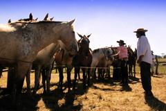 Oficio (Eduardo Amorim) Tags: horses horse southamerica criollo caballo uruguay cheval caballos cavalos pferde cavalli cavallo cavalo pferd pampa hest hevonen chevaux  amricadosul hst uruguai  amriquedusud   sudamrica suramrica amricadelsur  sdamerika crioulo caballoscriollos criollos   americadelsud tacuaremb  crioulos cavalocrioulo americameridionale caballocriollo eduardoamorim cavaloscrioulos iayayam yamaiay fiestadelapatriagaucha departamentodetacuaremb pampauruguaio pampauruguaya