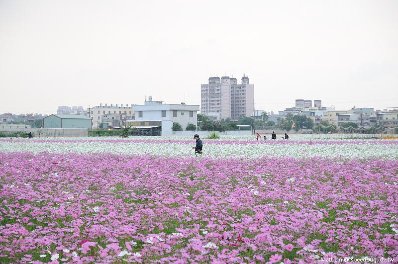 大寮花海 (26).jpg