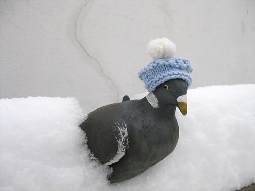 winter pigeon