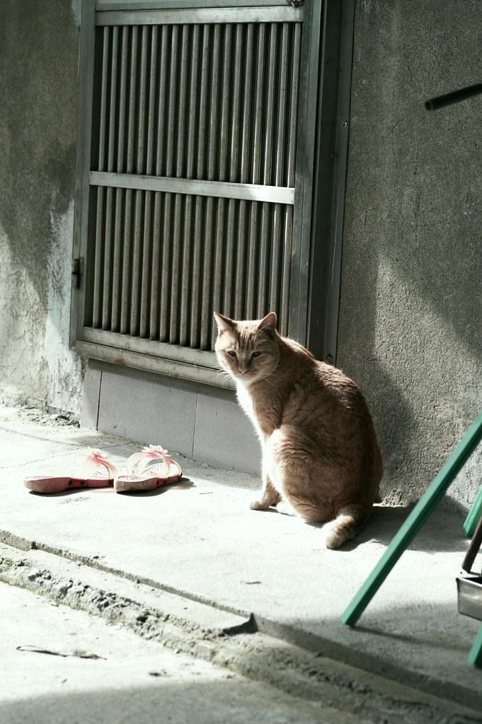 喵的咧~~~貓硐