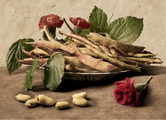 Still Life with Beans after Giovanna Garzoni (kevsyd) Tags: stilllife beans stilllifephoto giovannagarzoni kevinbest