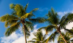 Anse Chastanet Palms (MattGrahamCA) Tags: beach clouds canon eos honeymoon mark bluesky palmtrees ii 5d stlucia ansechastanet canoneos5dmarkii