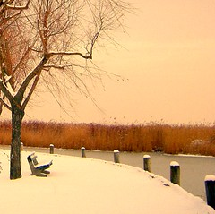 A Lonely Bench... (Rosa Dik 009 -- OFF (very busy)) Tags: winter light lake cold color nature composition austria frozen superb atmosphere simply burgenland neusiedlersee snowyday loweraustria abigfave lonelybench anawesomeshot winter2010
