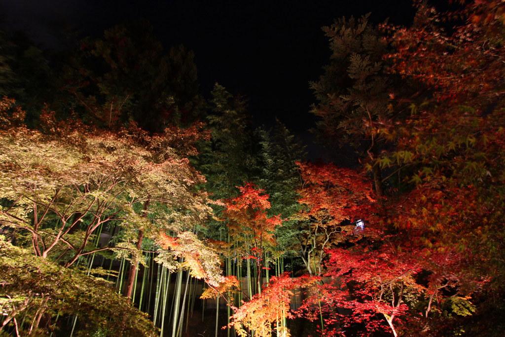 Kitanotenmangu Red Leaf Lightup 2010 (9)