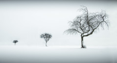 Minimalistic Winter 2 (Lbbse) Tags: schnee trees winter bw white snow black landscape three nikon monochrom minimalism bume schwarz acre acker drei soest weis d90 minimalismus bwartaward nikonflickraward