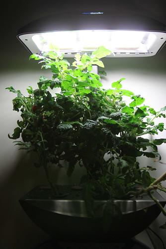 matrixplant