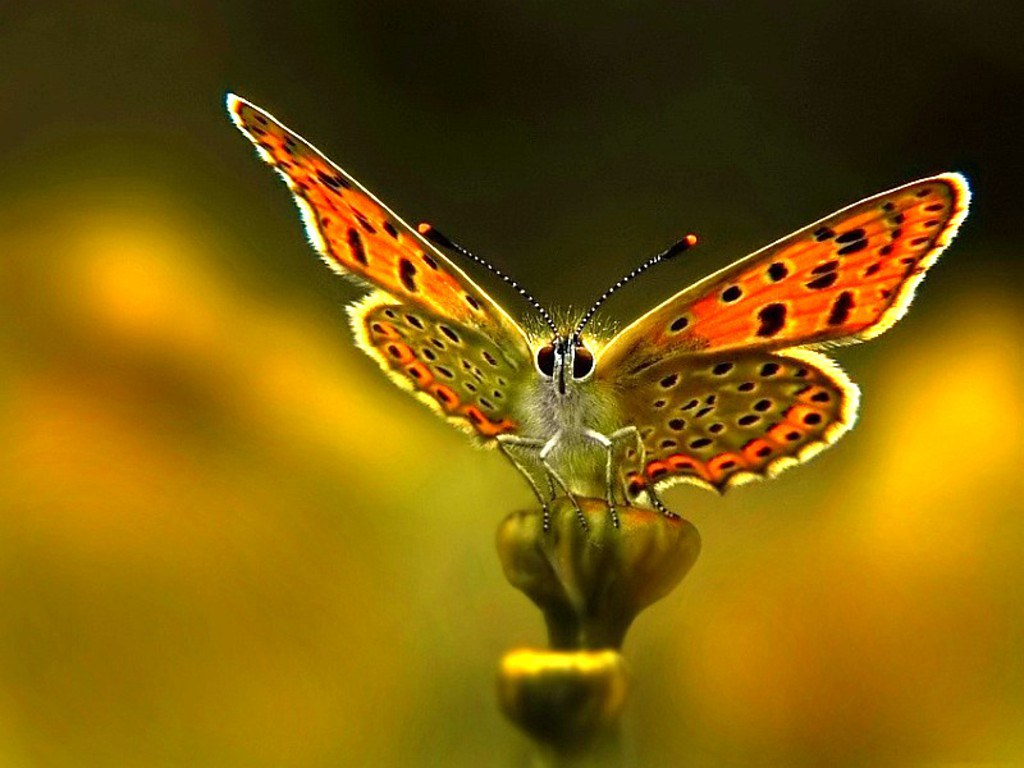 Tags: high definition nature wallpapers, High resolution Nature Wallpaper,