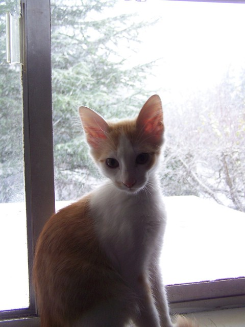 nov 118 Rusty's first snow!