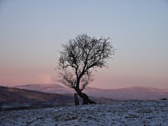 Solitude - Explored (Lune Rambler) Tags: trees sky cold twilight december peace freezing calm valley fells winterbeauty coth lunevalley platinumheartaward absolutelystunningscapes oltusfotos coth5 lunerambler tripleniceshot mygearandme mygearandmepremium mygearandmebronze mygearandmesilver mygearandmegold mygearandmeplatinum mygearandmediamond 4timesasnice 6timesasnice 5timesasnice 7timesasnice