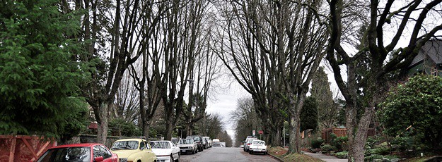 steet with trees