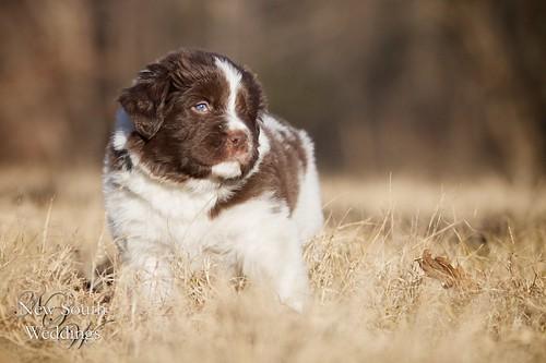 2010-12-23-Puppies9