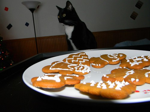 Cookie catte