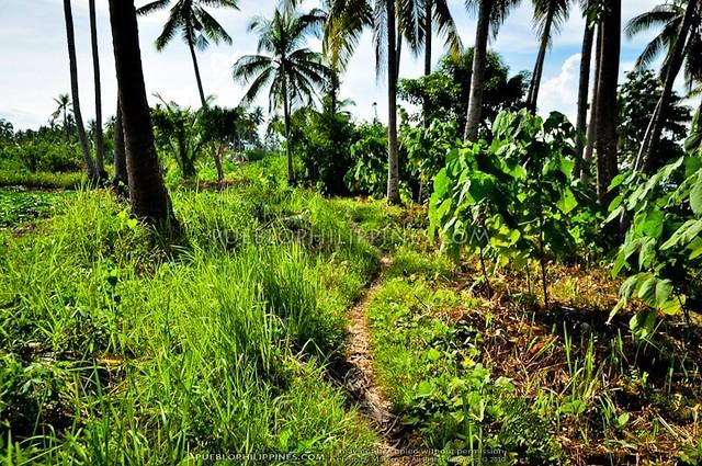Talikud Island - Samal City 10-10 (634)