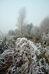 Christmas Frost (Strangelove 1981) Tags: christmas trees ireland snow cold ice forest shannon 2010 coclare 5photosaday clarefrost