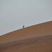 Bird on dune rim