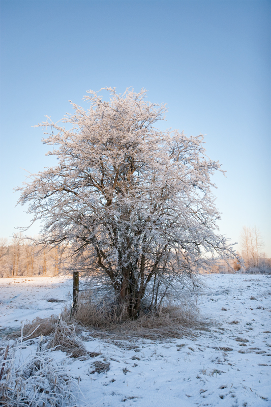 Winter-Tree_6370