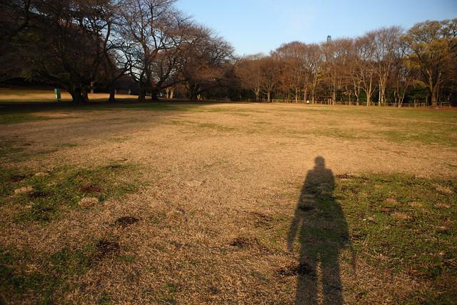 真冬の芝生