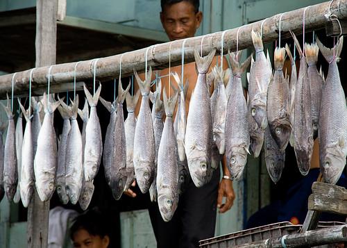 kampung-fish1