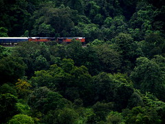 Colorful loco in lush green !!! (Jay fotografia) Tags: railroad india tourism trekking karnataka trainspotting indianrailways dudhsagar irfca doodhsagar braganzaghats jayasankarmadhavadas amaravathiexpress