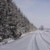 survived Xmas (GdeB fotografeert) Tags: winter ees boswandeling boswachterijexloo wintersbeeld gdebfotografeert januari2010 vakantieindrenthe