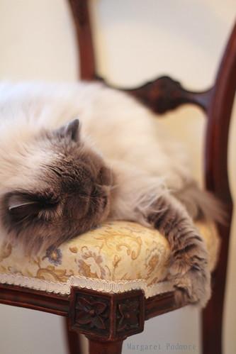 Oscar having a nap...