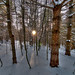 light and shadow (nosha) Tags: trees winter light sunset shadow white tree beauty forest vermont vt lightroom nosha