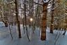 light and shadow (nosha) Tags: trees winter light sunset shadow white tree beauty forest vermont vt lightroom nosha