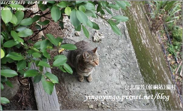 台北瑞芳(侯硐站)貓村20101128_I5622