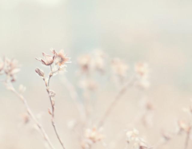 0116_seeds