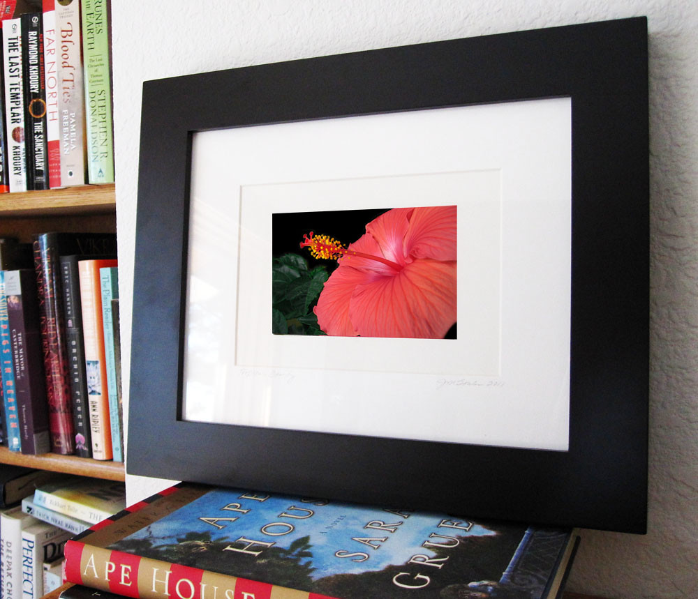 Tropical Beauty Frame Display 2