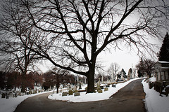 (cw3283) Tags: trees winter snow cold philadelphia cemetery grave graveyard weather philly phila laurelhillcemetery