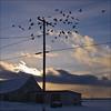 Sunset Symphony in -12 c (NaPix -- (Time out)) Tags: sunset sky snow cold barn landscape pigeons flight powerlines symphony napix sunsetsymphonyin12c