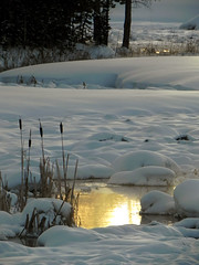 Golden Stream. (Peaceful Meadows) Tags: winter sunset snow creek landscape cattails yellowstone