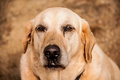 Boom  headshot :P (Richard Mart1n) Tags: pet dog animal friend bestfriend bset travel awesome animals zoo nikon d5000