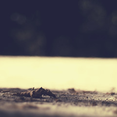 Viviendo mi otoño (_Zahira_) Tags: parque hoja lafotodelasemana ground olympus 100v10f nd otoño seca retiro suelo autunm tierra caída e500 uro 100vistas p1f1 ltytrx5 ltytr1 50mmom 50omf18