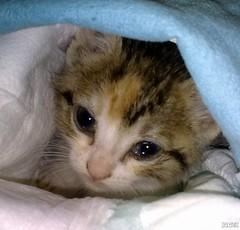 Baby cat (selenis) Tags: baby cores nokia kitty explore bebé 2010 gatinha 5800