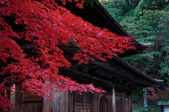 20101121 Jyokouji 1 (BONGURI) Tags: autumncolors 紅葉 愛知 aichi ricoh a12 seto gxr autumntints 瀬戸 定光寺 jyokouji